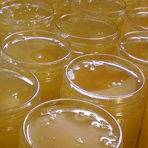 Notre miel : Miel d'acacia, miel de lavande, romarin, châtaigner, garrigues, tournesol