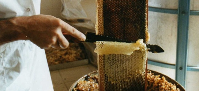 Récupération du miel des cellules