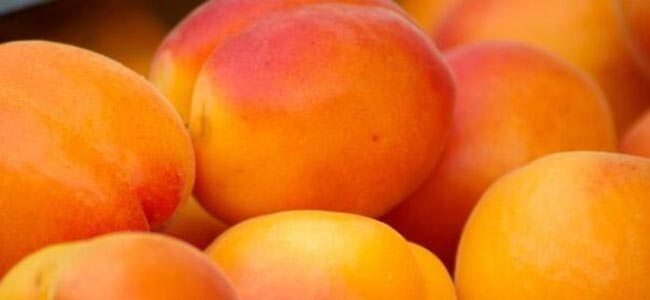 abricots pour notre confiture