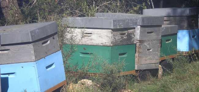 nos ruches proche de Roussas